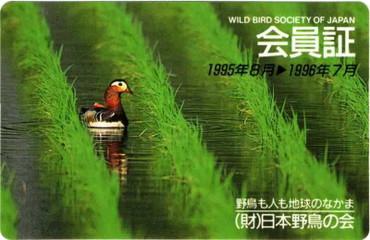 Wbsj1995